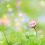 おしゃれな写真〜お花とシャボン玉